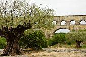 Árboles en el Pont du Gard