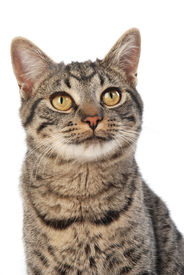 picture of animal eyes  - A bright wide eyed curious happy cat - JPG