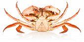 Fresh Red Crab