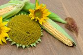 Flowers Sunflower And Corn On The Cob On A Wooden Board