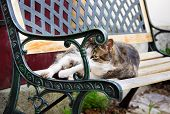 Reposing Cat  Lying On Bench