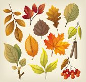 stock photo of alder-tree  - Set of colorful isolated autumn leaves and berries - JPG