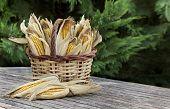 Corncobs In Basket