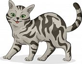 Illustration of a Cute Gray American Shorthair Cat