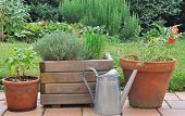 stock photo of planters  - different herbs in pots placed on a terrace - JPG