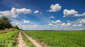 Ground Road Stretches To Horizon