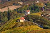 Rural house among autumnal vineyards on the hills of Langhe in Piedmont, Northern Italy (view from a