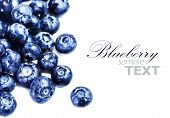 Blueberries Isolated On White Background With Copy Space For Text, Close Up. Group Of Huge Blue Berr