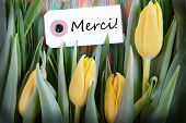 Tulip Background With Merci