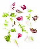 stock photo of escarole  - Heap of green healthy leaves salad on white - JPG