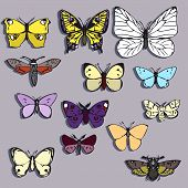 set of butterflies of different colors
