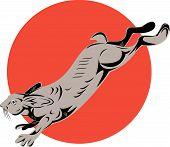 Постер, плакат: Сноушу заяц прыжки