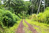 A red dirt road in the mountains of Fiji show the rich, vibrant green plant growth in of a wet, rain