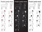 FRESH LAMB meat parts