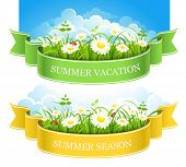 Summer composition with green grass, flowers and ladybirds. Vector