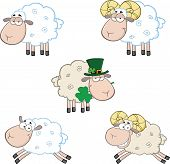 Ram and Sheep Cartoon Characters. Collection Set