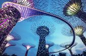 picture of singapore night  - Night view of the Supertree Grove in the Graden by the Bay in Singapore - JPG