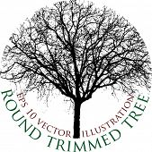 picture of tree trim  - round trimmed tree with sample text - JPG