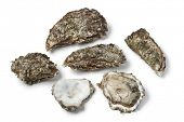 Raw Pacific oysters on white background