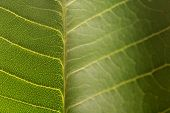 Macro leaf with soft focus