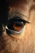 Close Up Of Horse Eye