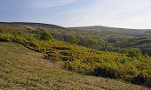 Rowbarrows & Dunkery Hill