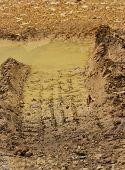 Wheel Tracks On Mud After Raining