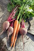 Fresh organic carrots and beet. Fresh vegetables are on the stump.