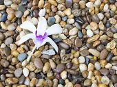 White and purple orchid on pebbles
