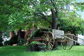 Horse and Buggy Wagon