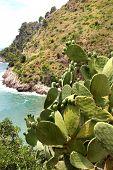 Wild Landscape In Gaeta, Italy