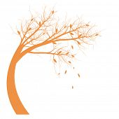 Autumn Tree silhouette isolated on white