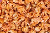 dried shrimp closeup