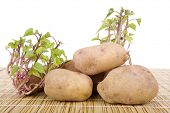 Potatoes sprouting at the kitchen table