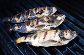 Fresh Pink Snapper Cooked On A Grill