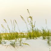foto of dune grass  - Calm beach with dunes and green grass in sunset  - JPG