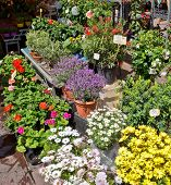 City Of Nice - Flowers In The Street Market