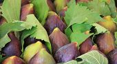 Fresh Figs At The Market
