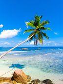 Palms Dream Beauty