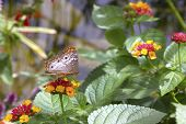 Butterfly, On Flower, Side View