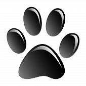 pic of paw-print  - Print black paws on a white background - JPG