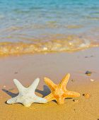 Beautiful Sea Stars