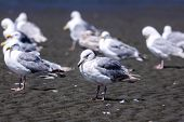 Seagulls On A Beach