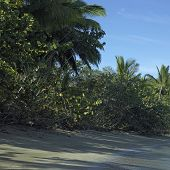 stock photo of deserted island  - Deserted island with tall - JPG
