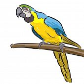 Editable vector illustration of a macaw parrot in felt pen style on a white background