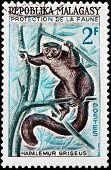 Gray Bamboo Lemur