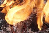 Flaming Firewood