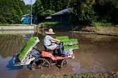 Japanese rice farmer planting his fields using  a planting tractor