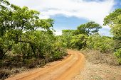 Dirt Road Turning in Brachystegia Woodlands, Kasungu National Park, Malawi