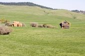picture of hayfield  - Old abandoned barn in a hayfield with rolling hills in the background - JPG